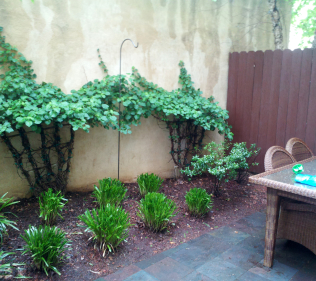 Stone Patio with Fence and Plantings