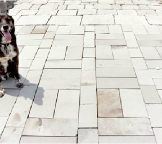 Pavers (and Buddy, Our Mascot)