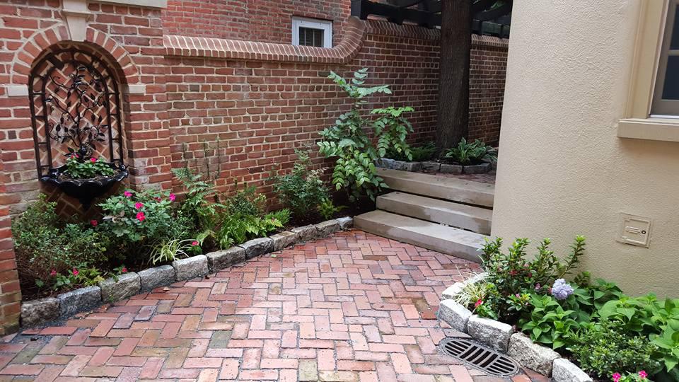 Urban Shade Garden